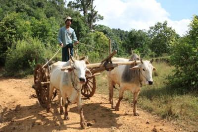 Środki transportu w górskich wioskach Birmy są dalekie do nowoczesnych