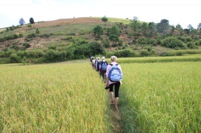 Na trekkingu z Kalaw nad jezioro Inle wielokrotnie przechodzimy po wysokich miedzach przecinających pola ryżowe