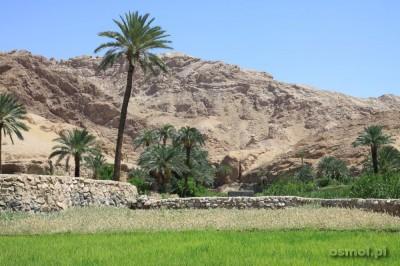 Na tarasowych polach oazy zielona trawa kontrastuje z suchymi górami