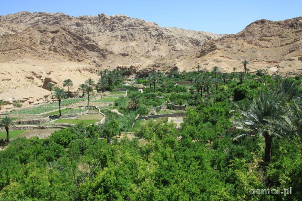 Azmirghan w Iranie. Pola uprawne, palmy, drzewa owocowe. Raj