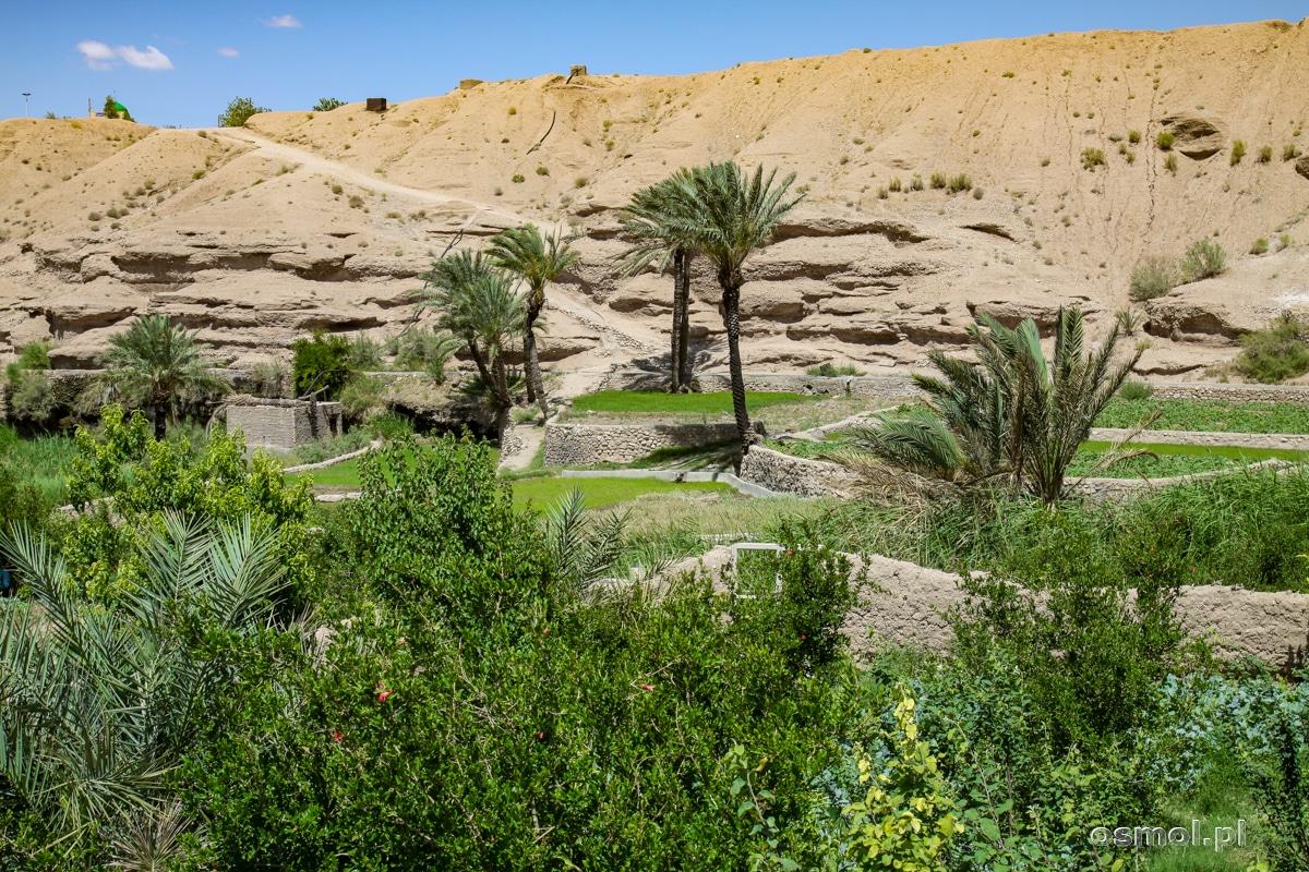 Tarasy uprawne w oazie Ezmeyghan
