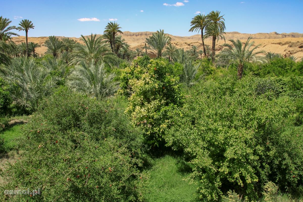 Zieleń oazy Ezmeyghan