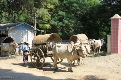 Taxi dla turystów w Mingun