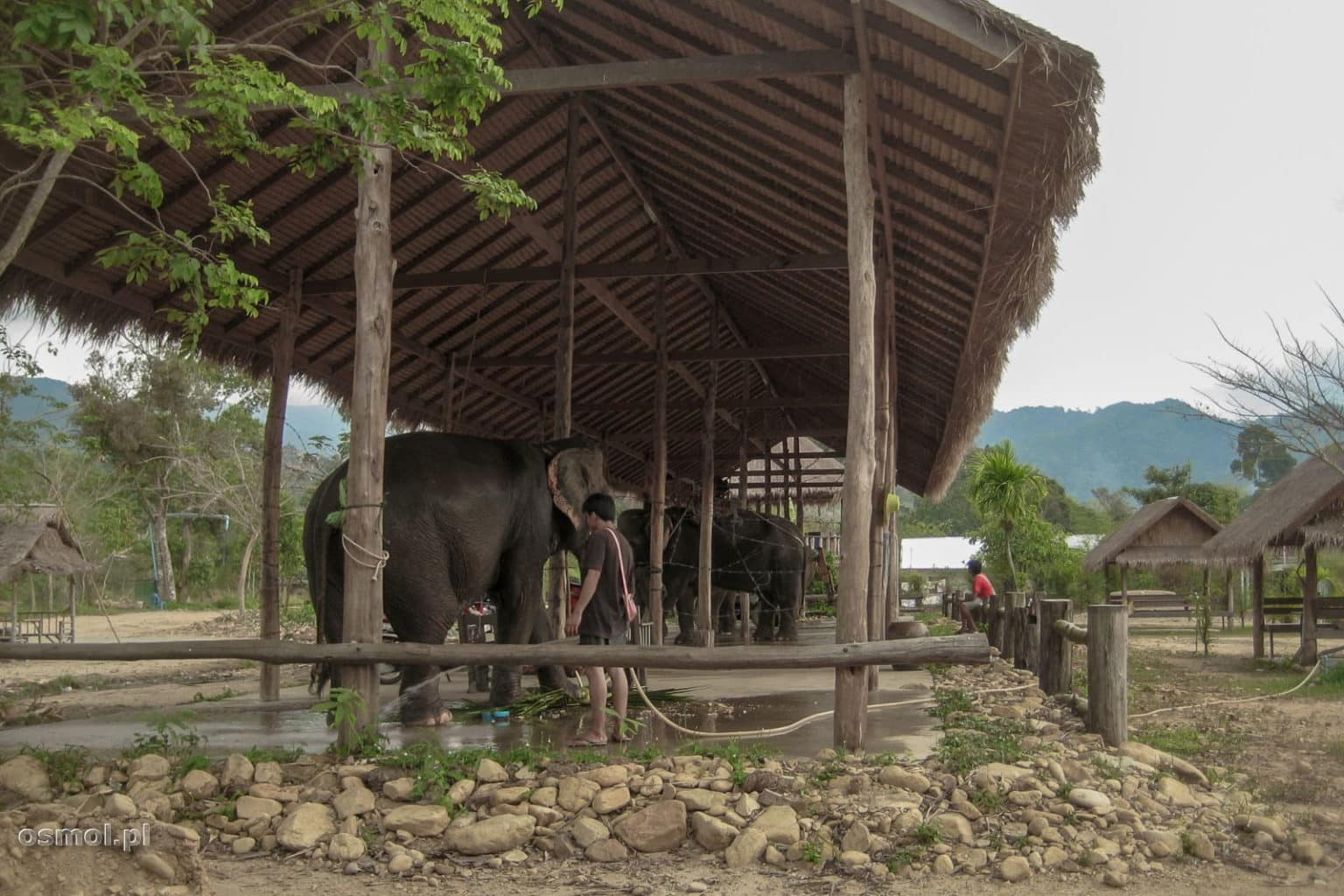 Słonie na Koh Chang