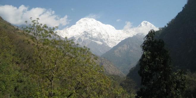 Im niżej na szlaku, tym więcej zieleni. Wkrótce białe szczyty Himalajów bajecznie odcinają się od zieleni roślin