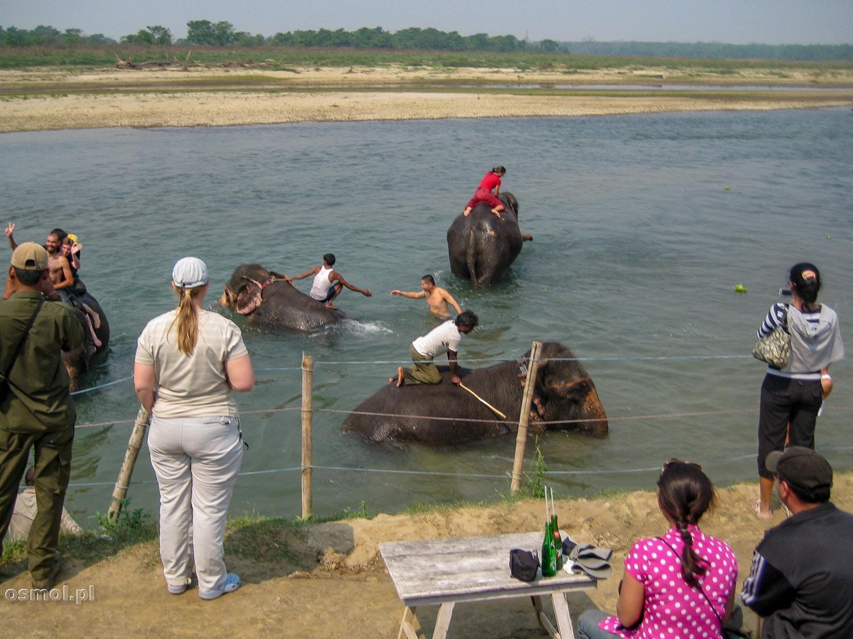 Kąpiel ze słoniem to jedna z głównych atrakcji turystycznych w Sauraha.