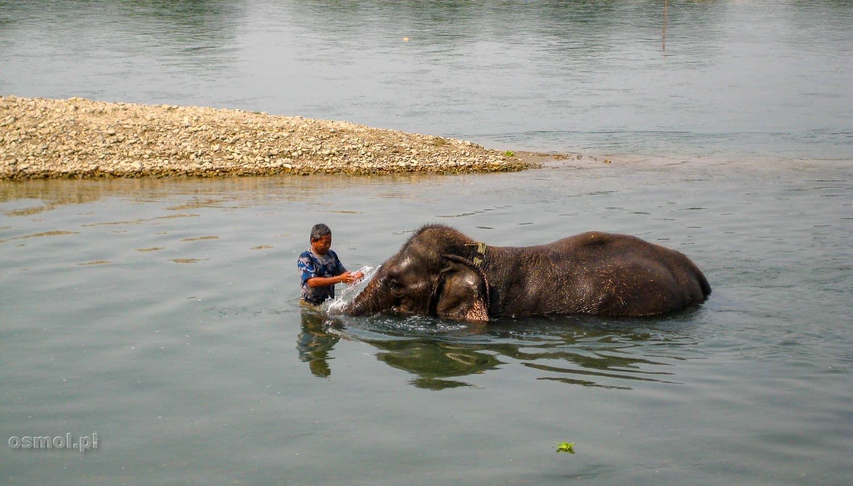 Kąpiel słonia w miejscowości Sauraha w Nepalu.