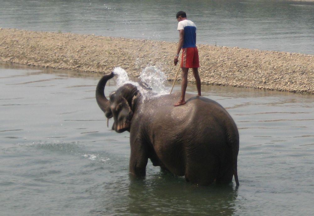 Chitwan. Kąpiel słonia