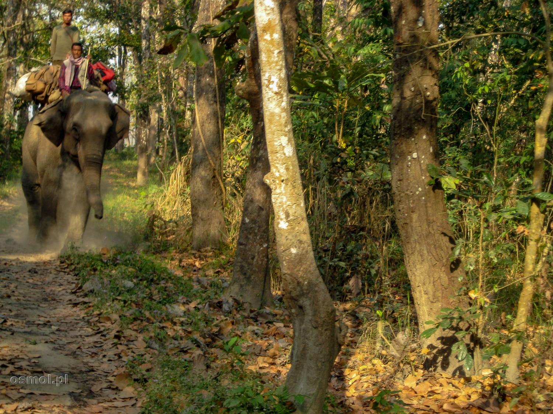 Jedni uprawiają safari na jeepie, inni na słoniach.