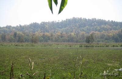 Widok na Park Narodowy Chitwan. W takich rozlewiskach pływają nosorożce i krokodyle