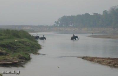Słonie przechodzą przez rzekę. Nepal