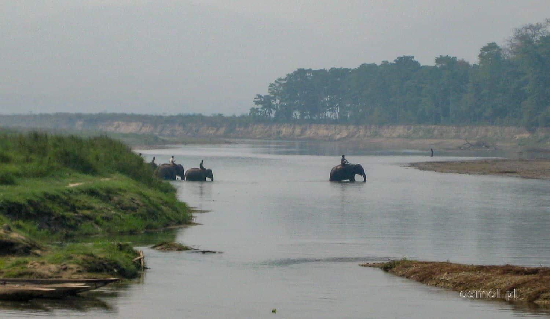 Słonie przechodzą przez rzekę z Sauraha do Parku Narodowego Chitwan