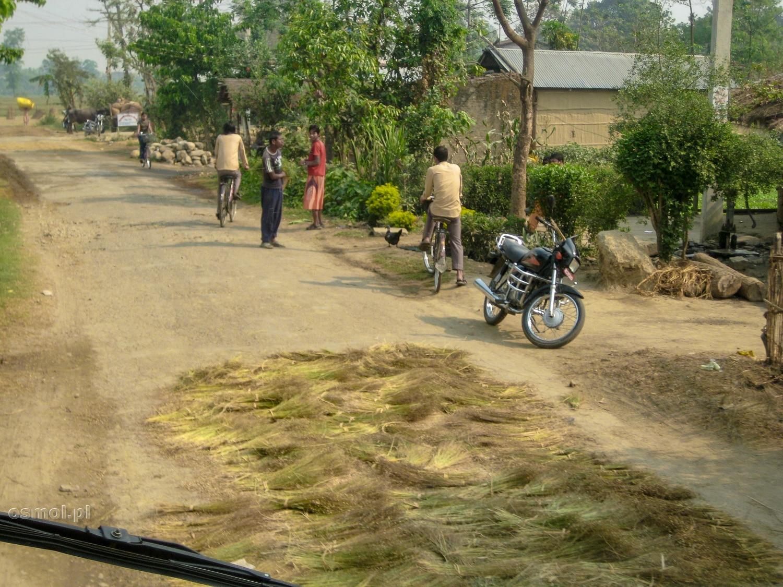 Nepal. Młócenie ryżu na drodze to codzienność. Przejeżdżające samochody to działają jak przyzwoita młockarnia ryżu.