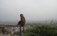 Świątynia Małp rzecz jasna jest schronieniem dla wielu