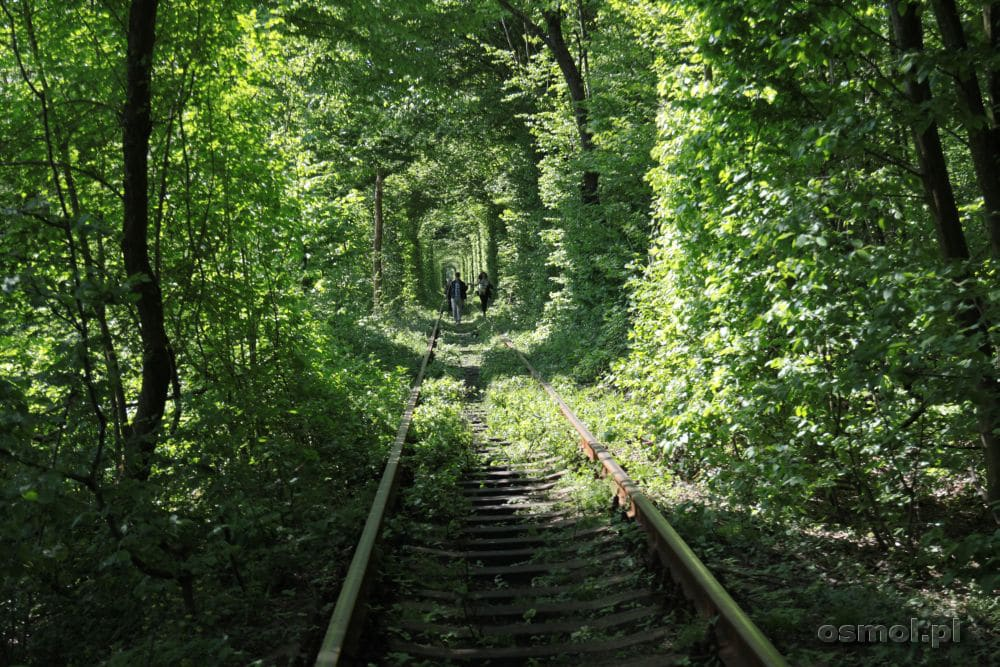 Tunel miłości w Klewaniu na Ukrainie