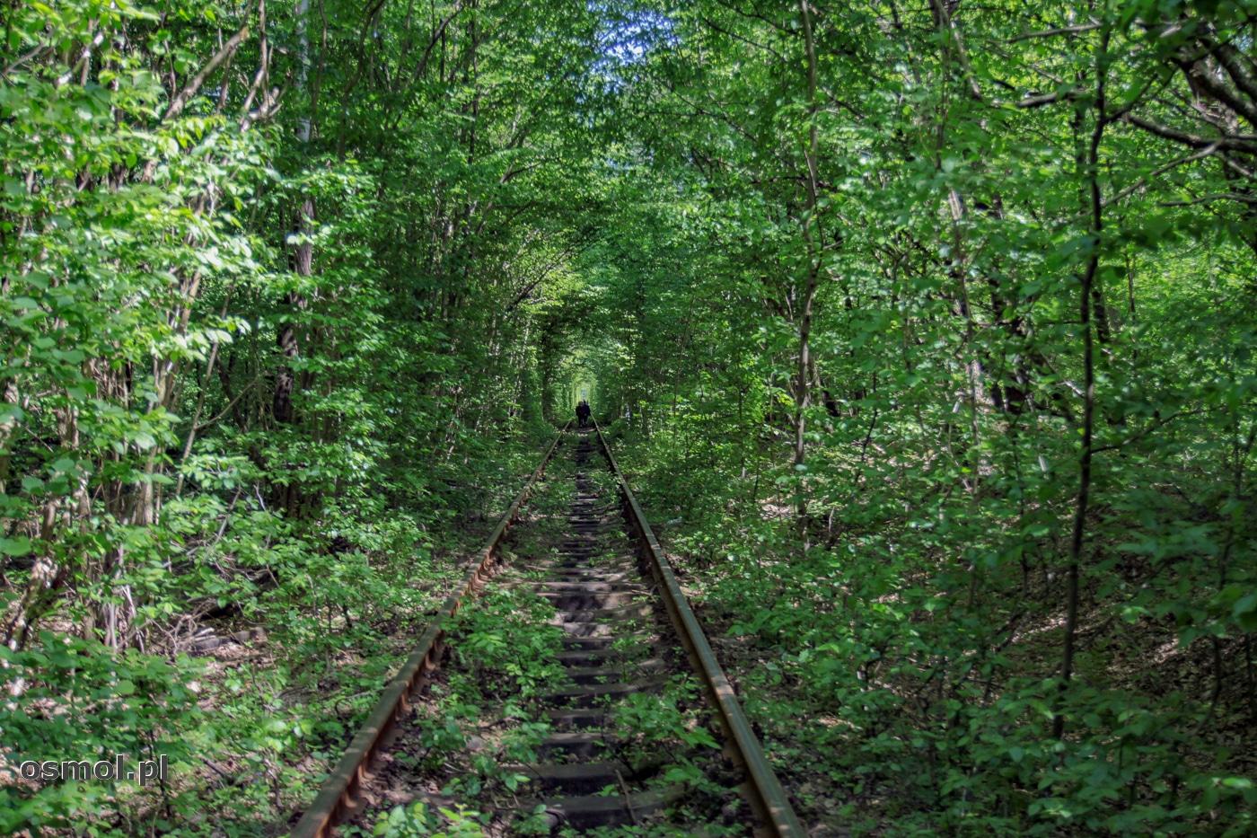 Tunel miłości powstał w sumie przypadkowo. Nad torami kolei wytyczonej przez las , zamykają się gałęzie drzew, tworząc niepowtarzalny nastrój.