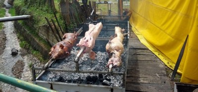 Jedzenie w Gucy na festiwalu