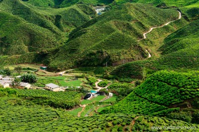 Malezja herbaciane pola