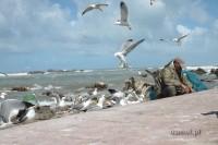 Maroko. Rybak czyści rybę w Essaouirze.