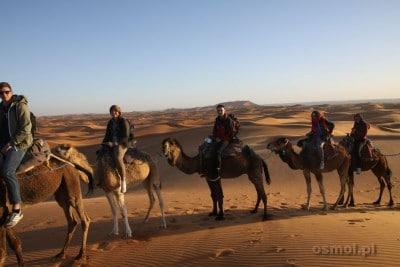 Maroko. Turyści na wielbłądach