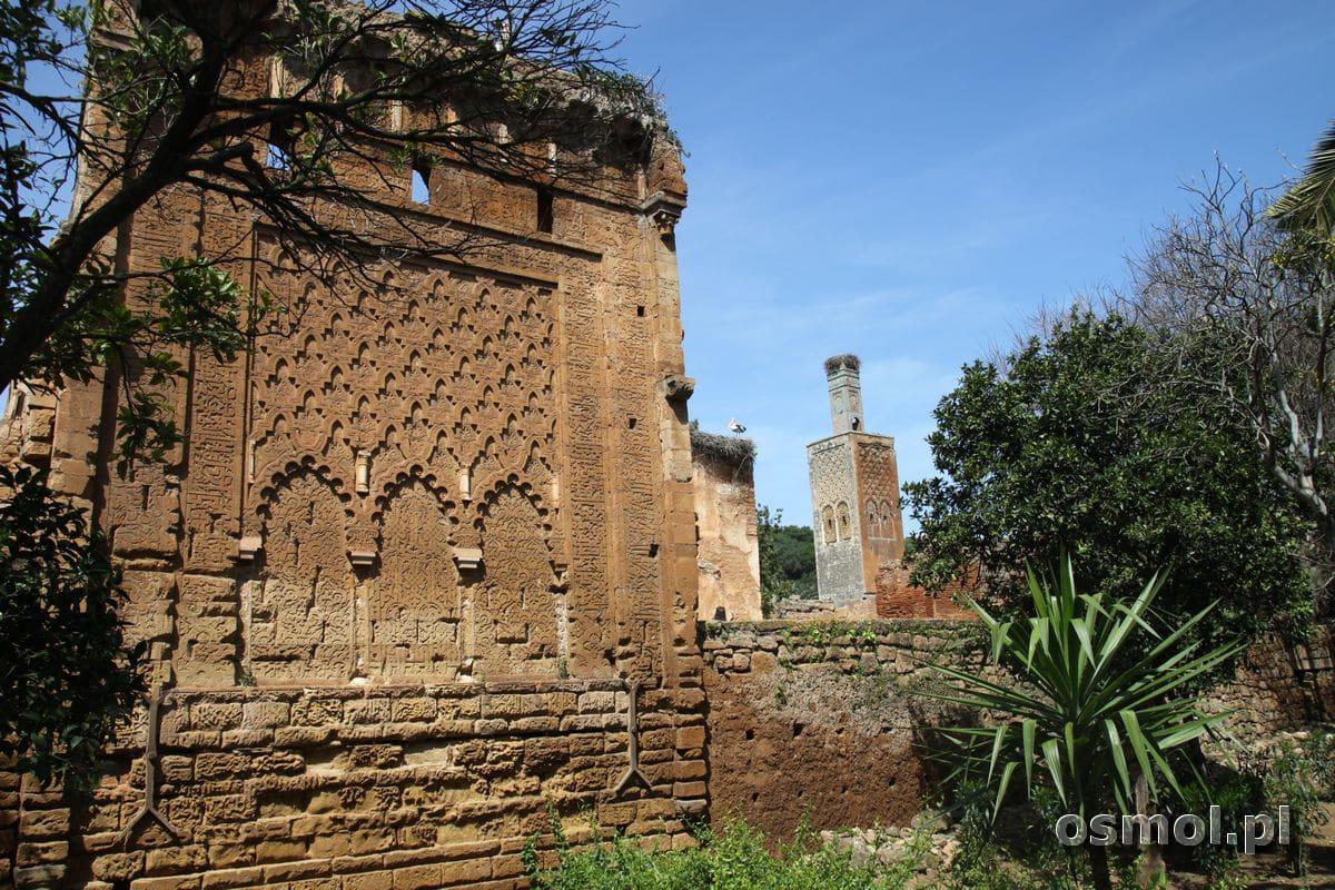 Szalla Rabat Maroko