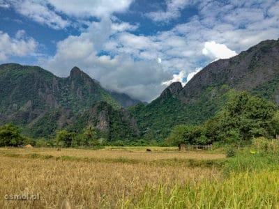 Pole ryżowe w okolicy Vang Vieng Laos
