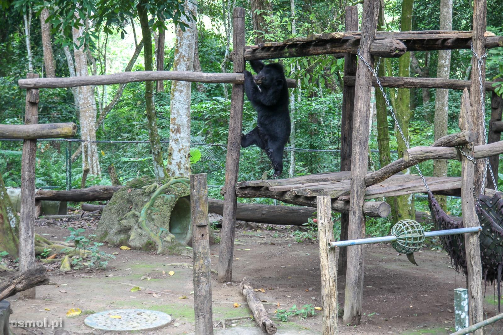 Niedźwiedzie w Laosie