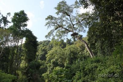 Park Linowy Laos