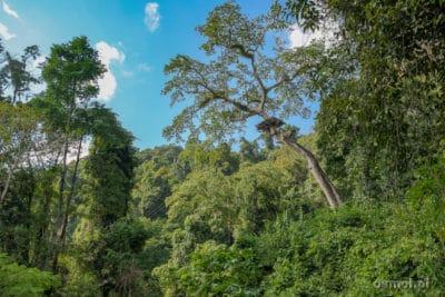 Park Linowy blisko Vang Vieng