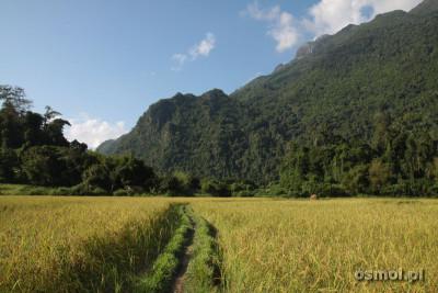 Ścieżka wśród pól ryżowych
