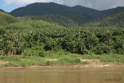 Brzegi Mekongu w Laosie