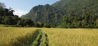 Droga wśród pól Laosu
