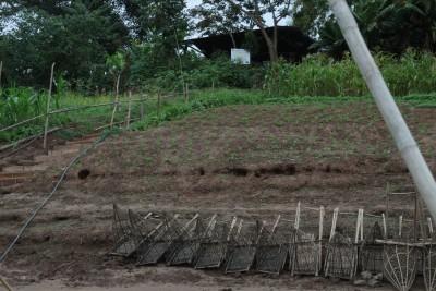 Laos uprawy nad brzegiem Mekongu