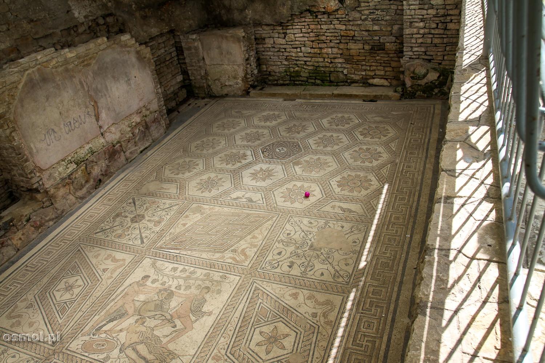 Starożytna Mozaika podłogowa z Puli