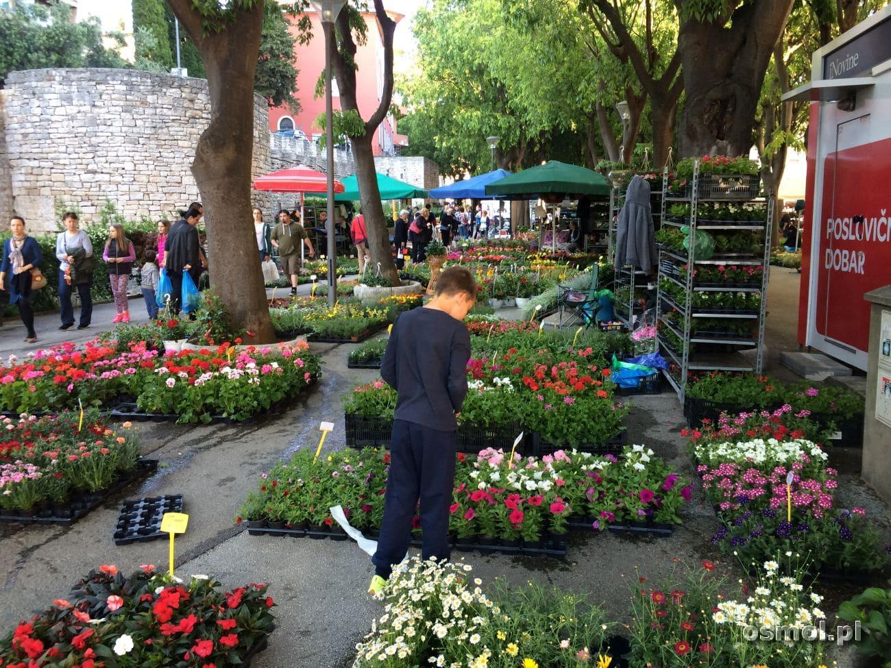 Targ kwiatowy w Puli