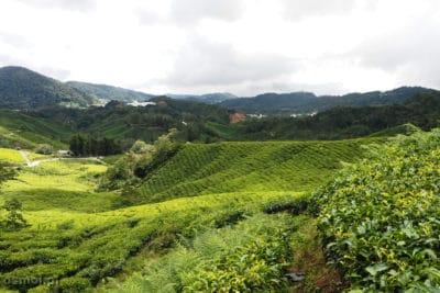 Na wzgórzach z plantacjami herbaty w Malezji