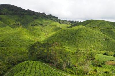 Malownicze herbaciane pola w Malezji