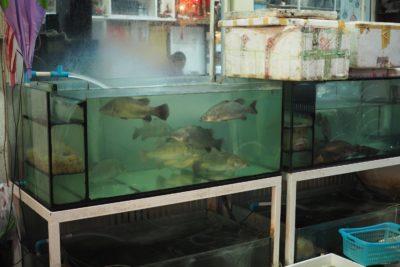 Bangkok - W CHina Town jedzenie można wybrać z akwarium