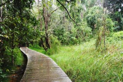 Ścieżka bagienna w Pyin Oo Lwin Birma