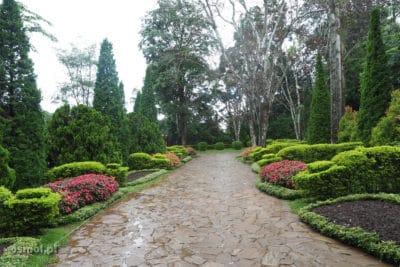 alejka w ogrodzie botanicznym