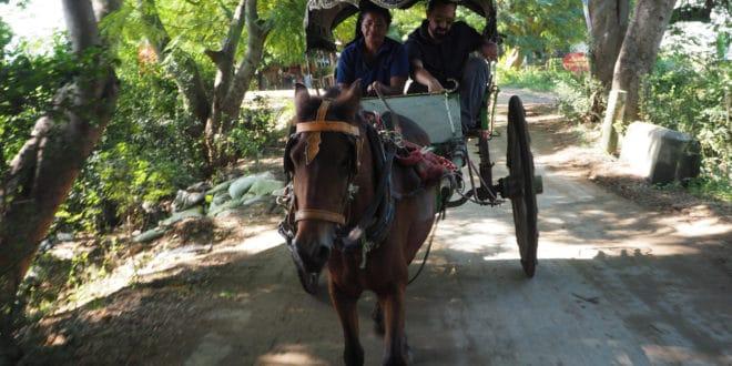 Bryczka konna jaką jeździ się w Inwie pomiędzy atrakcjami