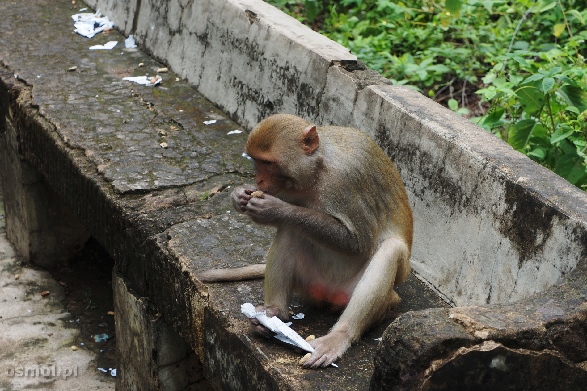 Małpy w Pho Win Daung