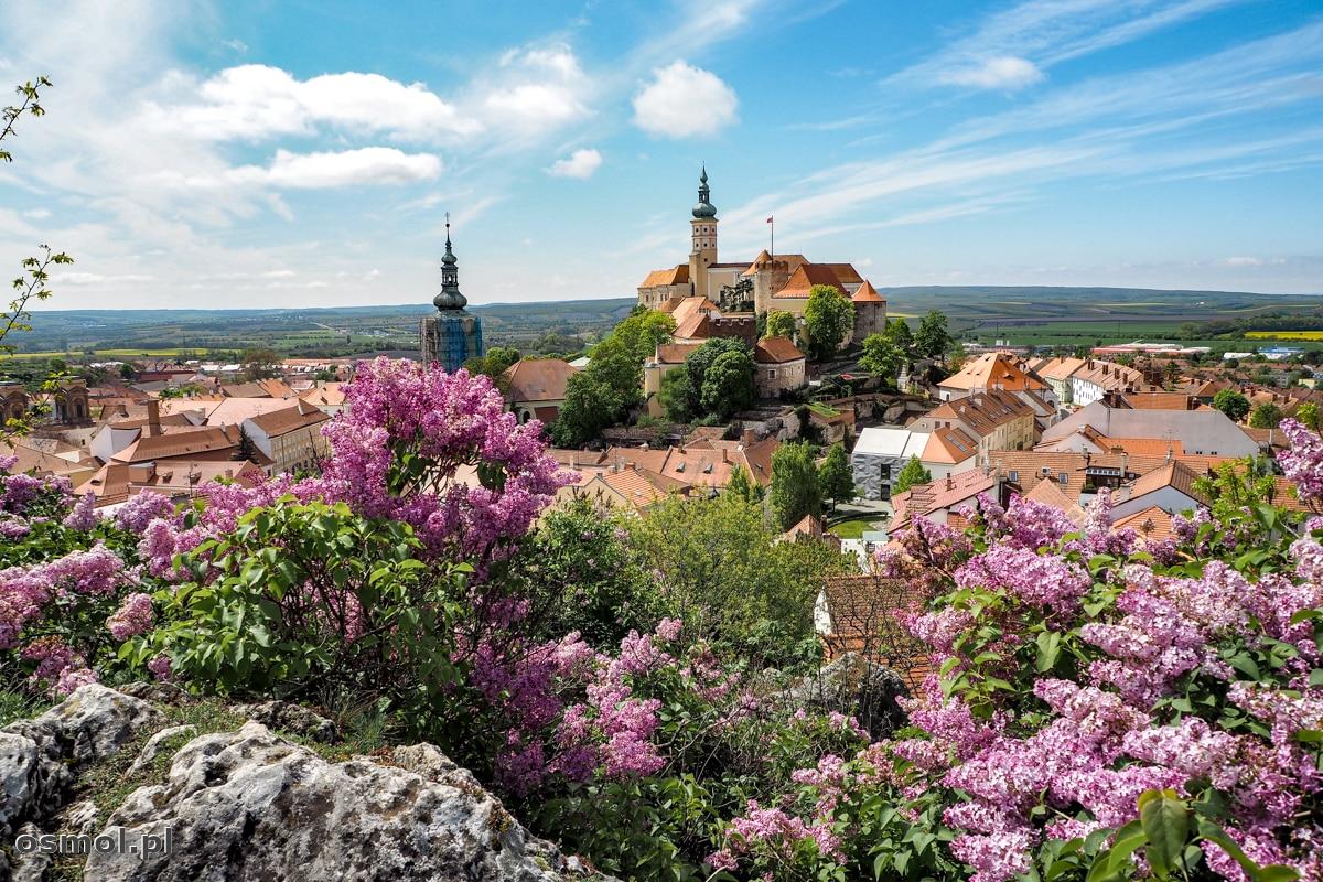 Mikulov wiosną... widok na zamek broni się sam. Bzy, zapach i piękny widok