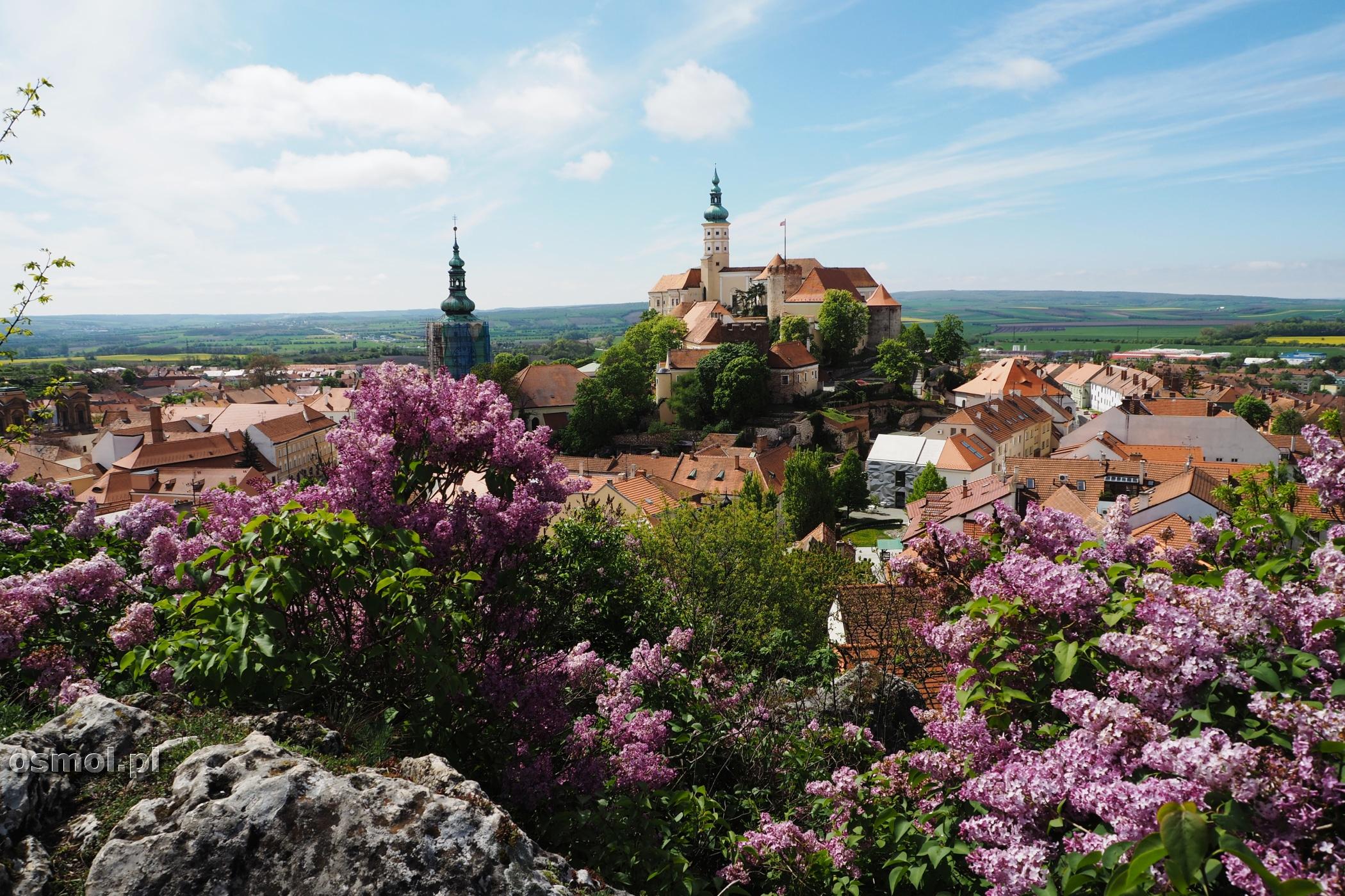 Widok na Mikulov w Czechach