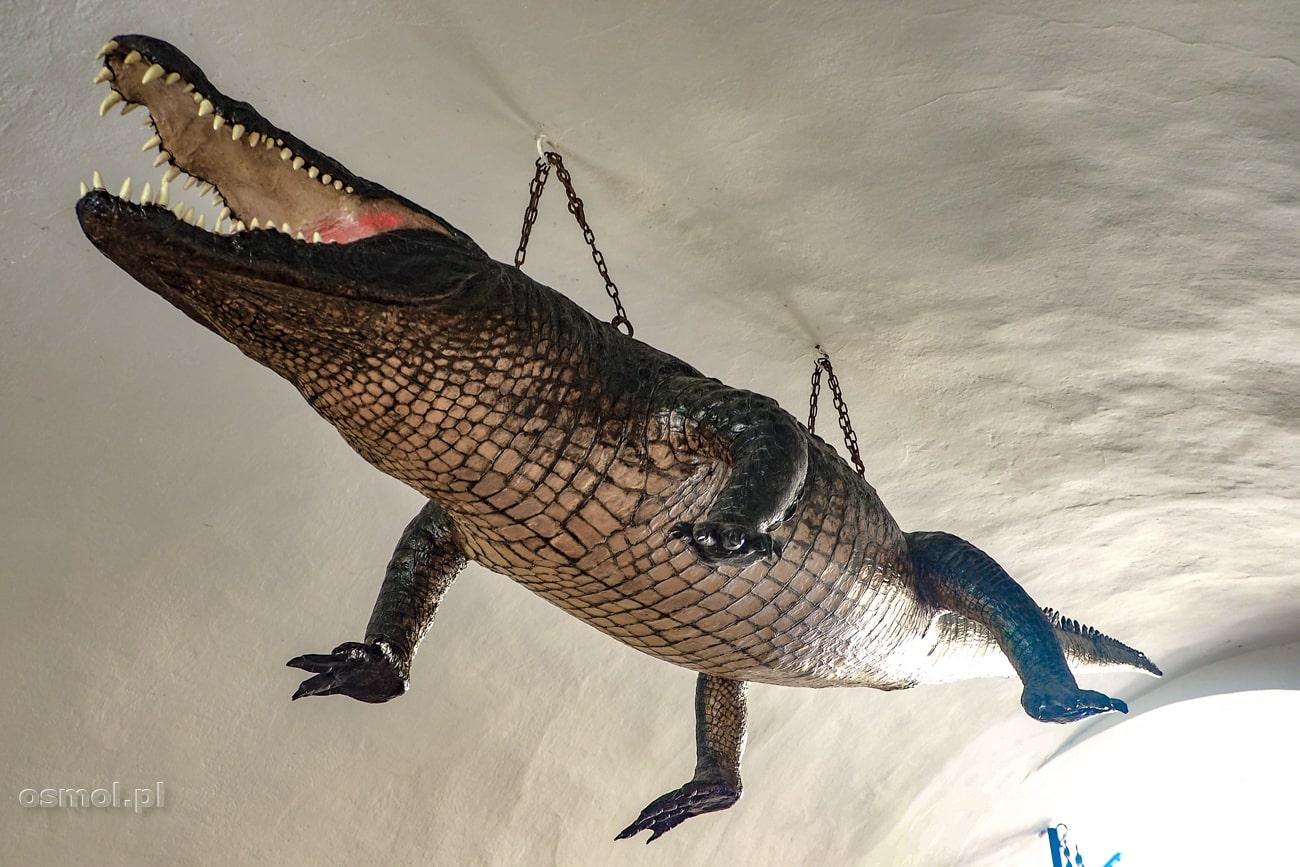 Smok czyli krokodyl w Ratuszu w Brnie