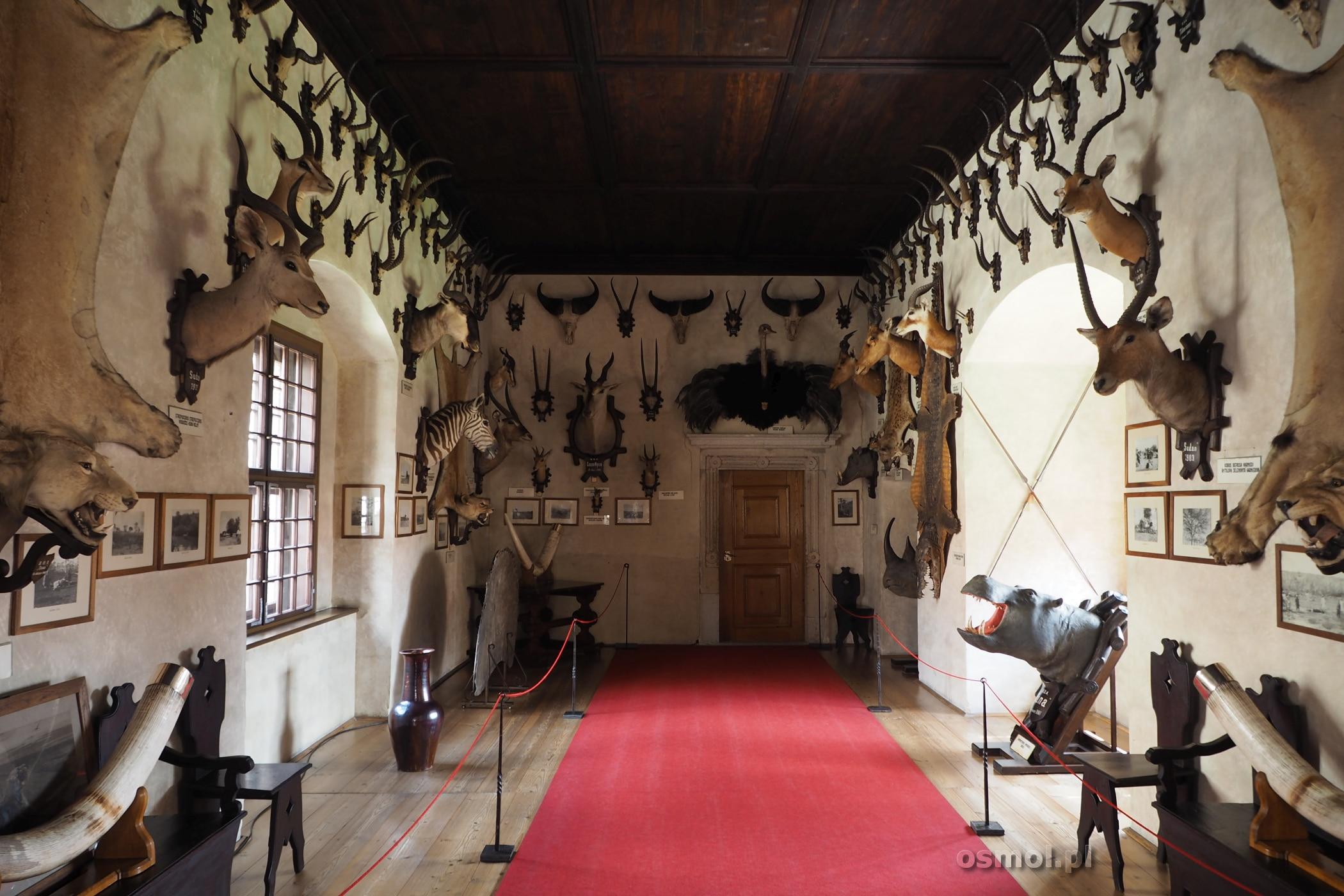 Sala myśliwska na zamku.