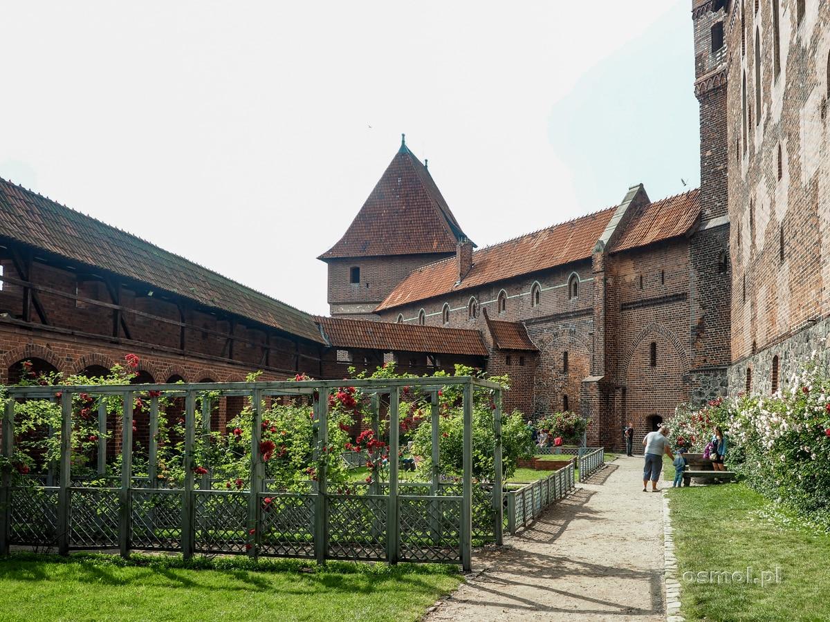 Ogród Różany na zamku w Malborku