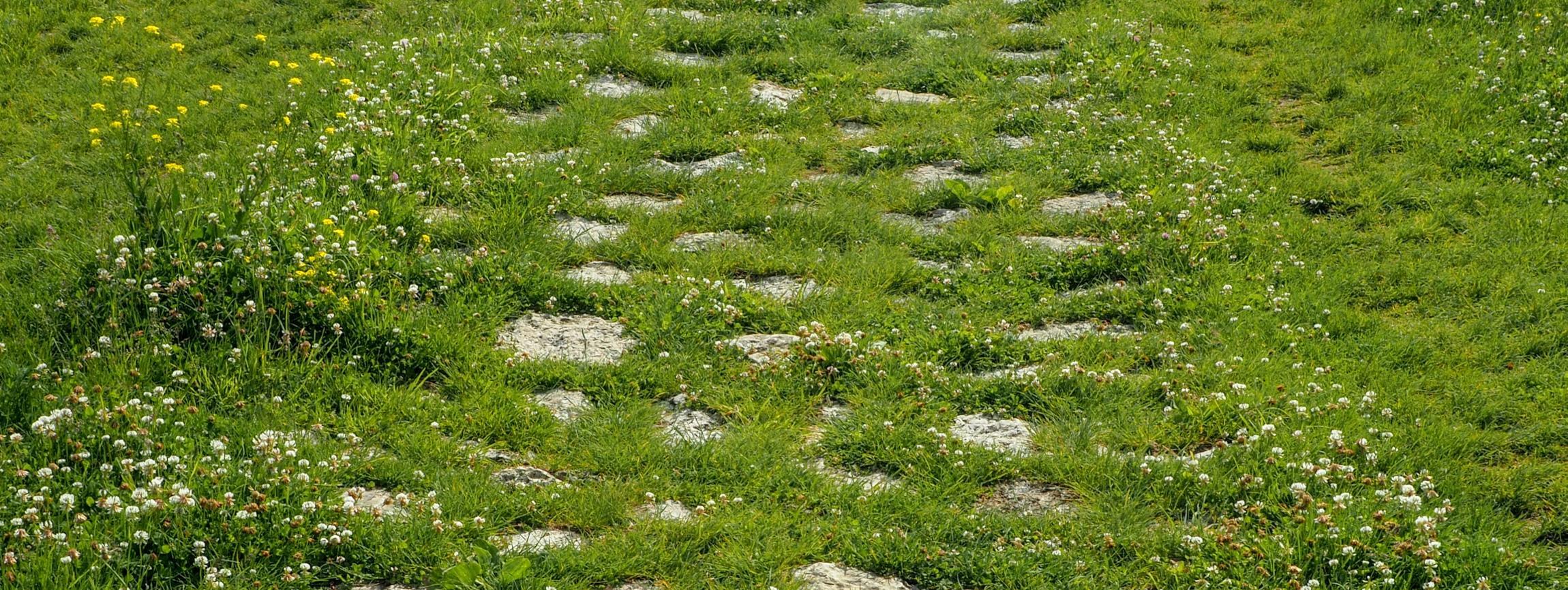 Zarośnięta kamienna ścieżka do Spiskiego Zamku