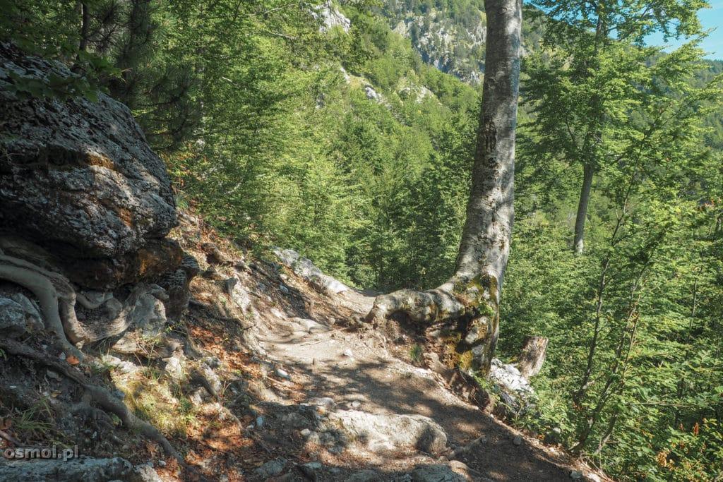 Ścieżki może nie są szerokie, ale idzie się nimi bardzo wygodnie.
