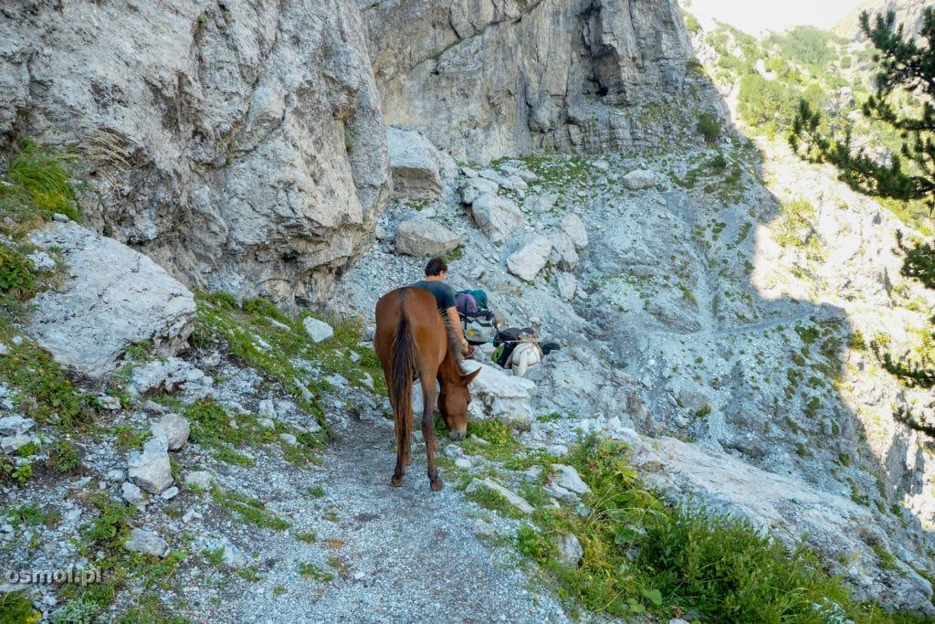 Koń na szlaku w Górach Przeklętych